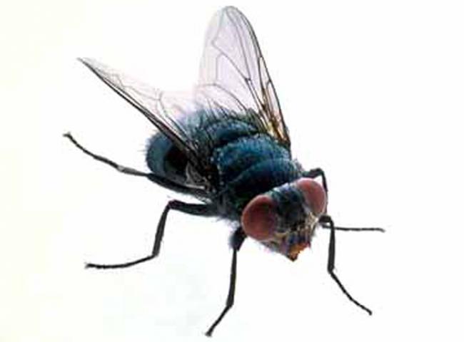fly2[1]